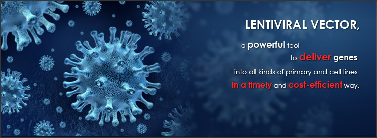 LENTIVIRAL VECTOR, a powerful tool to deliver genes into all kinds of primary and cell lines in a timely and cost-efficient way.